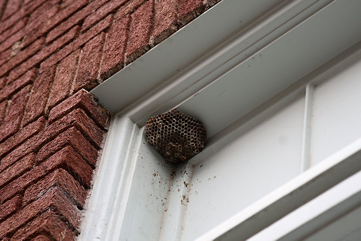 We provide a wasp nest removal service for domestic and commercial properties in Maidenhead.